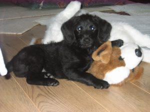 Pero (Petra puppy)